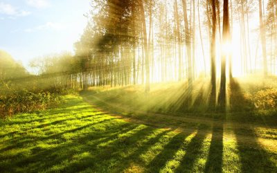 New Online Course on Embracing Death with Marcy Vaughn Starts May 8